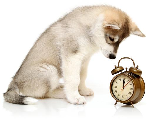 husky-hodiny-small