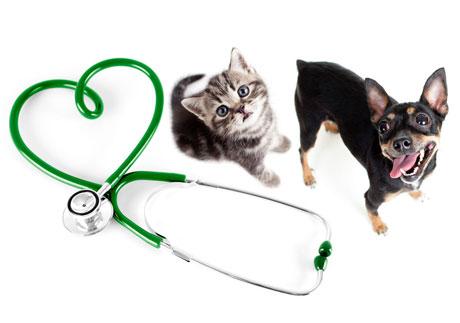 Kotě a pes u stetoskopu